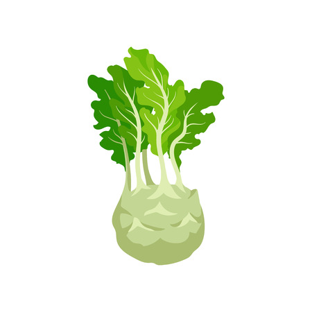 Kohlrabi with bright green leaves. Turnip cabbage. Natural and healthy vegetable. Fresh ingredient for vegetarian dish. Flat vector design