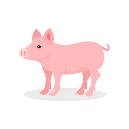 Little piglet, farm animal vector Illustration isolated on a white background.