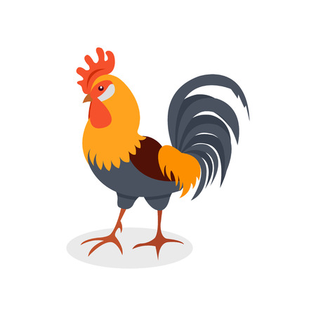 Colorful rooster, poultry farming vector Illustration isolated on a white background. Ilustração
