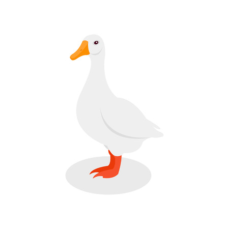 White domestic goose, poultry farming vector Illustration isolated on a white background. Illustration