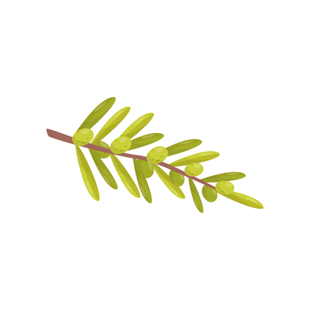 Small branch with green olives and leaves. Natural cooking ingredient. Healthy food. Decorative flat vector element for product packaging