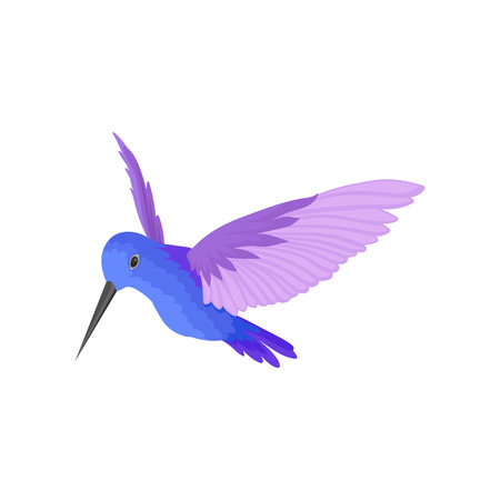 Beautiful blue hummingbird with big purple wings. Small tropical bird with long thin beak. Wild feathered animal. Fauna theme. Colorful vector illustration in flat style isolated on white background.