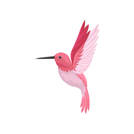 Colorful illustration of flying hummingbird. Colibri with pink feathers and long thin beak. Beautiful tropical bird. Wildlife and fauna theme. Vector icon in flat style isolated on white background.