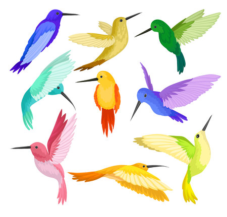 Set of hummingbirds with colorful plumage. Colibri with long thin beaks and bright feathers. Beautiful tropical birds. Wildlife theme. Vector illustrations in flat style isolated on white background.