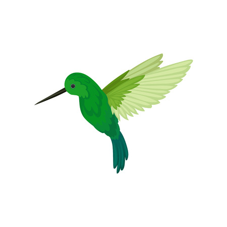 Flat vector icon of flying colibri. Small tropical hummingbird with long thin beak and bright green feathers. Wildlife theme Reklamní fotografie