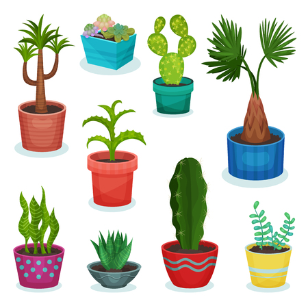 Evergreen house plants in flower pot set, element for decoration home interior vector Illustrations isolated on a white background.