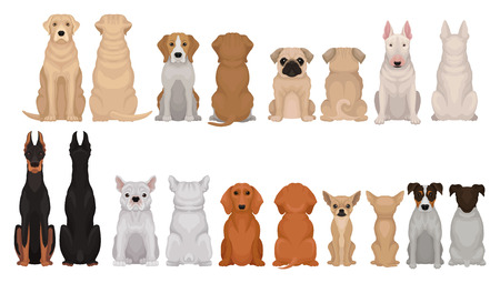 Set of dogs of different breeds, front and back view. Cute domestic animals. Home pets. Flat vector for poster of zoo shop or vet clinic Vectores
