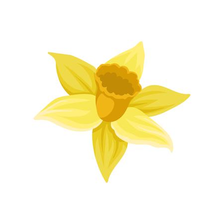 Symbol der Narzisse. Narzisse mit leuchtend gelben Blütenblättern. Frühlingsblume. Buntes grafisches Element für botanisches Buch, Grußkarte oder Textil. Flache Vektorillustration lokalisiert auf weißem Hintergrund.