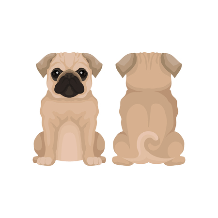 Flat vector illustration of funny pug puppy, front and back view. Small domestic dog with round head, short muzzle and curled tail