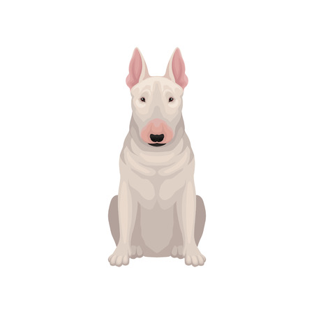 Portrait of sitting bull terrier. Dog with egg-shaped head and short white coat. Humans best friend. Flat vector icon Illustration