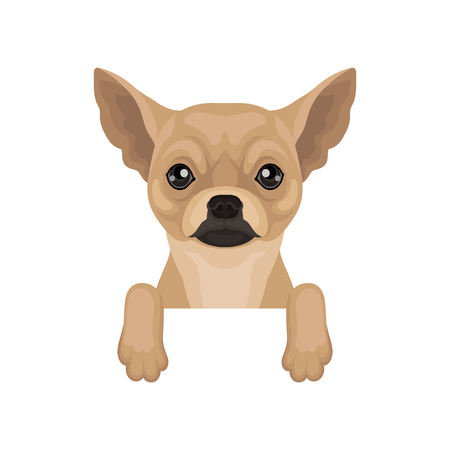 Chihuahua puppy hanging on invisible border. Home pet. Flat vector for promo poster of pet clinic or dog food packaging Illustration