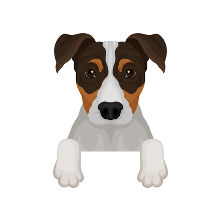 Jack russell terrier hanging on invisible fence. Dog with adorable muzzle. Flat vector for poster or banner of pet shop 向量圖像