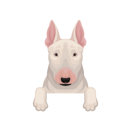 Bull terrier peeking out from border, muzzle and paws. Home pet. Flat vector element for web banner of animal shelter