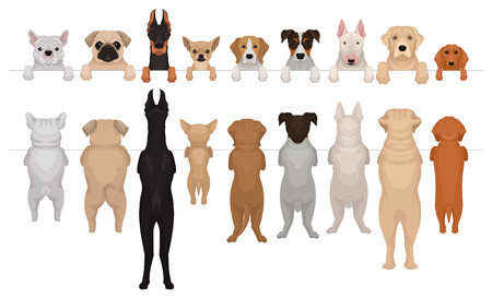 Set of dogs of different breeds hanging on border. Portraits of muzzles with paws peeking out from fence and full bodies. Front and back view. Isolated flat vector elements for advertising banner. Stock Illustratie