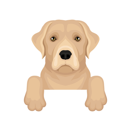 Labrador retriever hanging on border. Friendly dog with beige coat and cute muzzle. Flat vector for poster of pet shop or vet clinic