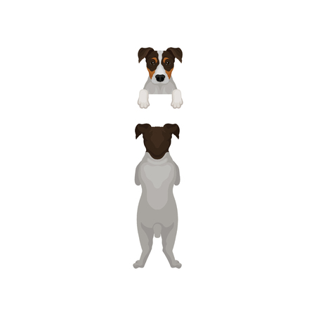 Back view of jack russell terrier standing on hind paws and muzzle peeking out from fence. Dog hanging on border. Flat vector design
