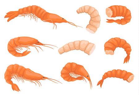 Ensemble de crevettes entières et décortiquées sans têtes. Crevettes bouillies et crues. Fruits de mer gastronomiques. Éléments graphiques pour l'emballage du produit ou l'affiche publicitaire. Vecteur plat coloré isolé sur fond blanc.