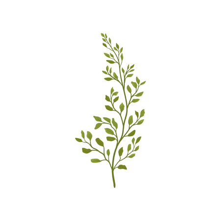 Fern branch with small green foliage. Forest plant. Decorative graphic element for postcard or poster of flower shop. Colorful vector icon. Illustration in flat style isolated on white background.