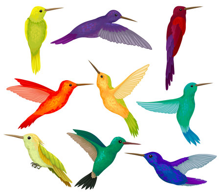 Hummingbirds sest, tiny birds with bright colorful plumage vector Illustration isolated on a white background.