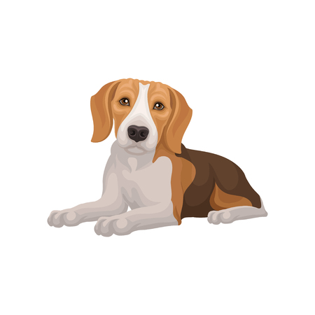 Flat vector design of lying beagle dog. Small puppy with cute muzzle. Domestic animal. Element for pet food packaging