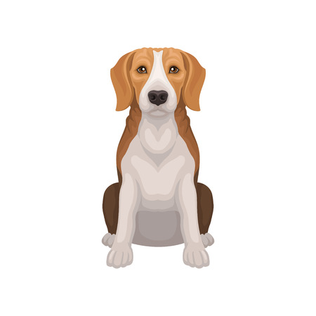 Beagle with shiny eyes in sitting position. Small breed of hunting dog. Short-haired puppy with long ears. Flat vector design