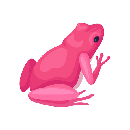Illustration of bright pink frog, back view. Small toad with black eye, squat body and smooth skin. Graphic element for children book or mobile game. Colorful flat vector isolated on white background.