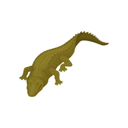 Crocodile aux yeux fermés, vecteur animal amphibien prédateur Illustration sur fond blanc