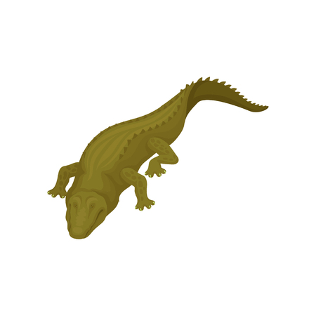 Crocodile with closed eyes, predatory amphibian animal vector Illustration on a white background 矢量图像
