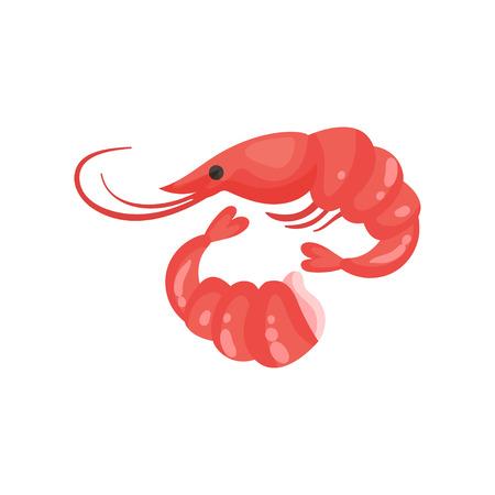Shrimp fresh seafood vector Illustration on a white background Illustration
