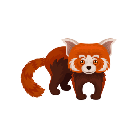 Cute chinese red panda wild animal vector Illustration on a white background Stock Photo