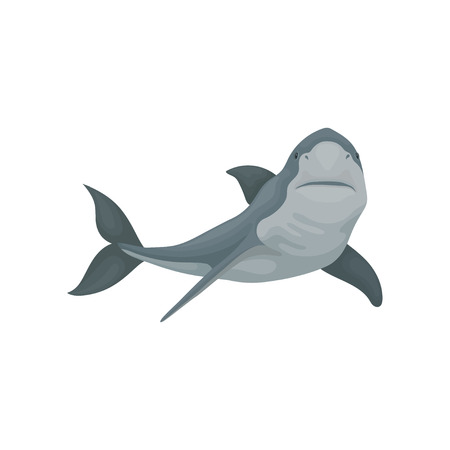 Swimming shark sea animal fish vector Illustration d on a white background