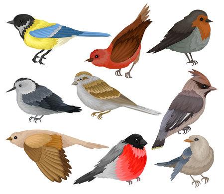 Conjunto de pájaros de invierno. Tema de vida silvestre y fauna. Animal salvaje con plumas. Elementos de vector plano para libro de ornitología