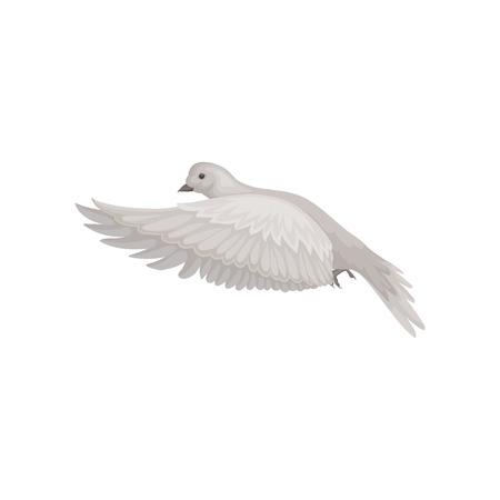 Dove with gray feathers in flying action. Bid in the air. Fauna and ornithology theme. Flat vector icon  イラスト・ベクター素材