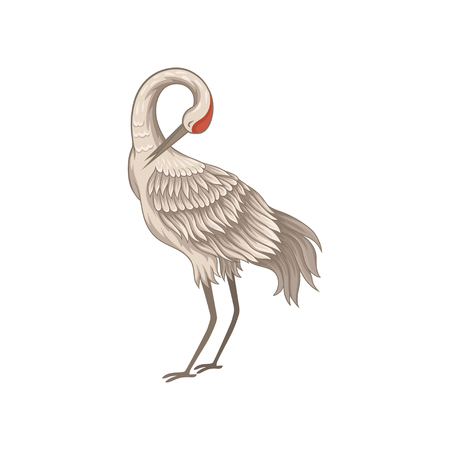 Adult red-crowned crane standing with tilted head down, side view. Beautiful wild bird long thin beak, legs and neck. Fauna theme. Decorative flat vector illustration isolated on white background.