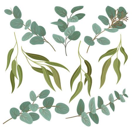 Collection de brindilles avec des feuilles vertes fraîches, vecteur d'éléments de design floral Illustration isolé sur fond blanc.