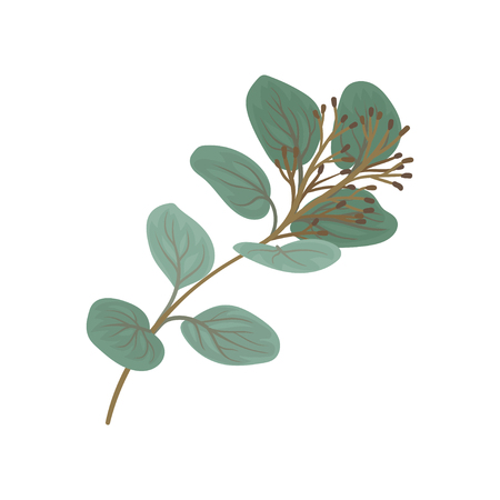 Twig with green leaves and buds, floral design element vector Illustration isolated on a white background. Illustration