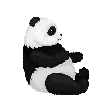 Illustration of cute panda sitting isolated on white background, side view. Young bamboo bear with fluffy black and white fur. Exotic animal. Wildlife and zoo theme. Colorful vector icon in flat style Illustration