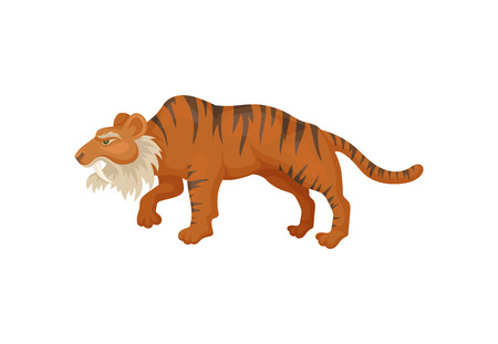 Large saber-tooth tiger or smilodon, side view. Prehistoric mammal. Wild animal from ice age. Flat vector design Illustration