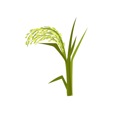 Illustration of green millet. Fast-growing cereal plant. Grain culture. Organic product. Agricultural crop. Farming theme. Graphic element for promo poster. Flat vector isolated on white background.