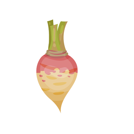 Colorful icon of ripe rutabaga or swede. Fresh vegetable. Organic product. Natural product. Edible plant. Food and nature theme. Cartoon vector illustration in flat style isolated on white background. Illustration