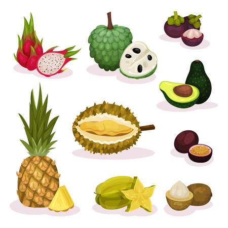 Detailed flat vector set of different exotic fruits. Natural product. Organic and tasty food. Vegetarian nutrition Stock Photo
