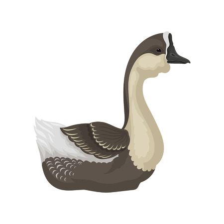 Illustration of goose with beige chest, gray head, wings and beak, side view. Wild bird. Wildlife and fauna theme. Graphic element for ornithology book. Flat vector icon isolated on white background. Иллюстрация