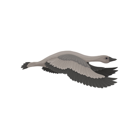 Goose in flying action, side view. Wild bird with long neck, dark gray feathers and beak. Wildlife theme. Graphic element for book. Colorful vector icon in flat style isolated on white background.
