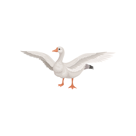 Farm goose standing with wide open wings. Wild bird with gray feathers, long neck, orange beak and legs. Domestic animal. Colorful vector illustration in flat style isolated on white background.
