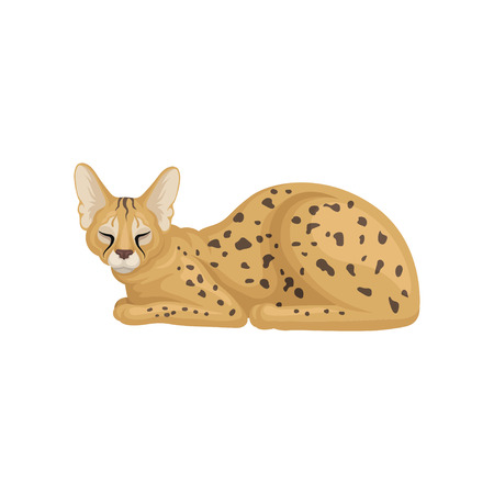 Colorful illustration of sleeping African serval. Brown wild cat with large ears and black spots on body. Predatory animal. Wildlife theme. Vector icon in flat style isolated on white background.