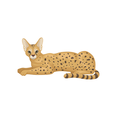 Lovely serval lying on floor, side view. Wild cat with large ears and black-spotted brown coat. African predatory animal. Wildlife theme. Vector illustration in flat style isolated on white background