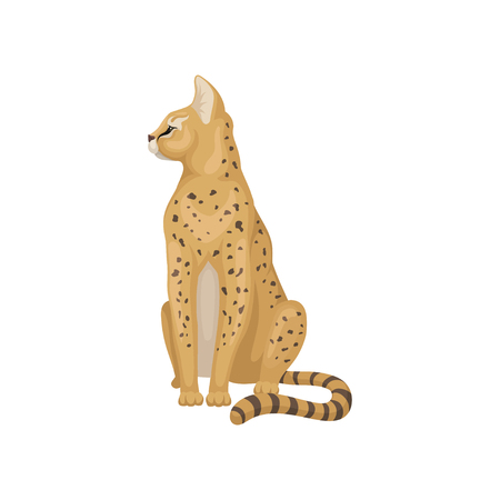 Cute serval sitting and looking around. Brown wild cat with black spots on body and large ears. Predatory African animal. Fauna theme. Colorful flat vector illustration isolated on white background.