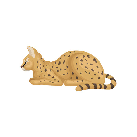 Beautiful serval lying isolated on white background, side view. Wild cat with large ears and black spots on brown coat. African animal. Wildlife theme. Colorful vector illustration in flat style.