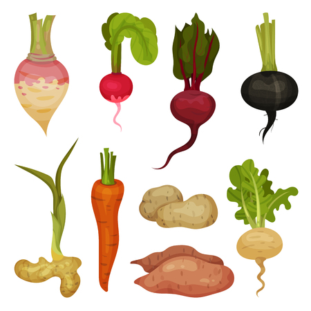 Collection of different root vegetables. Natural and healthy product. Organic food icons. Cultivated plants. Farming theme. Colorful vector illustrations in flat style isolated on white background.