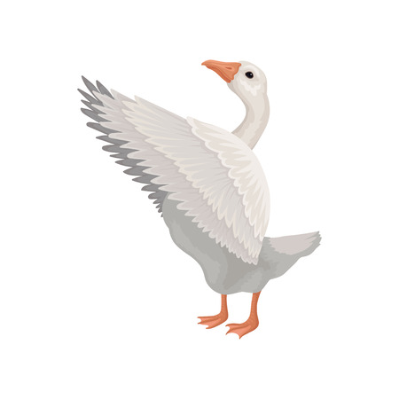 Gray goose standing with open wings, side view. Large farm bird. Domestic animal. Flat vector design Stock Photo